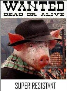 cochon-resistant